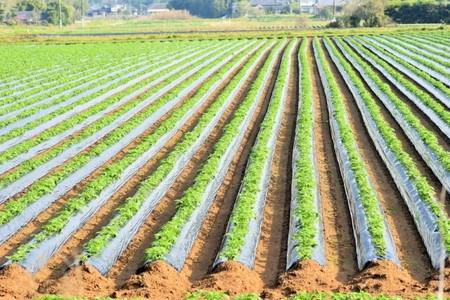 ジャガイモ の 植え 方